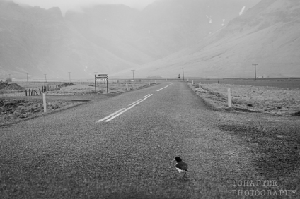 Iceland by 1Chapter Photography 13